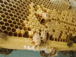 A méhpempő alkalmazása