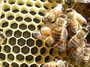 Méhpempő alkalmazási tippek