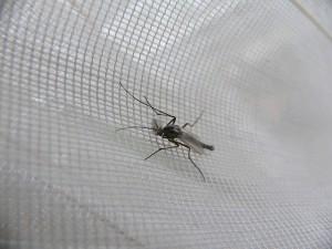 Szúnyogháló szerelés Törökbálint
